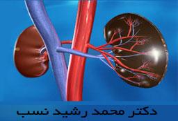 دکتر محمد رشید نسب